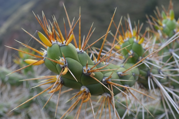 Closeup shot of a cactus with big spikes Free Photo