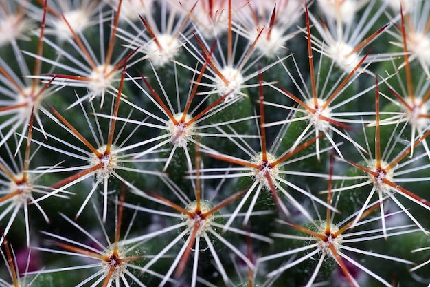 Closeup shot of a cactus with needles during daytime Free Photo