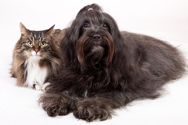 Colpo del primo piano di un gatto e un cane isolato su bianco Foto Gratuite