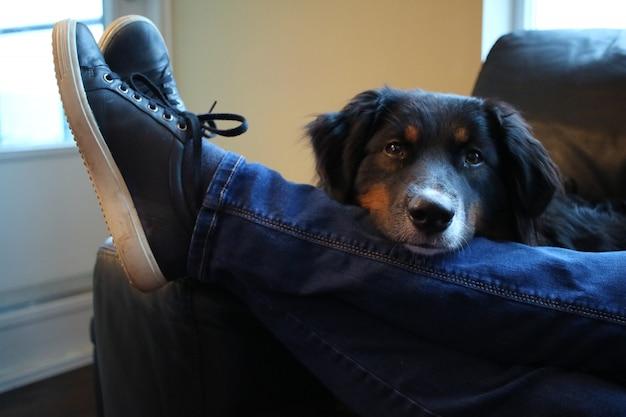 Colpo del primo piano di un simpatico cane nero seduto dietro la gamba di un maschio in jeans Foto Gratuite