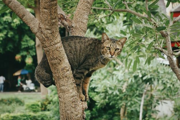Colpo del primo piano di un simpatico gatto seduto su un albero in un parco durante il giorno Foto Gratuite