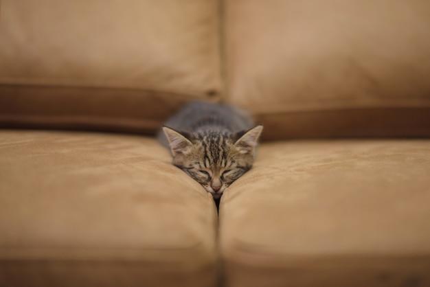 Colpo del primo piano di un simpatico gattino che dorme tra i cuscini di un divano Foto Gratuite