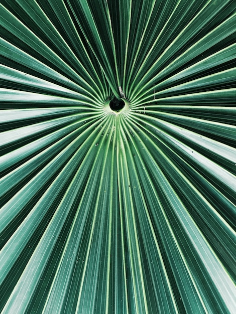 A closeup shot of an exotic tropical tree leaves Free Photo