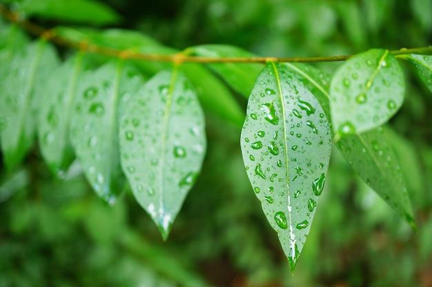 Colpo del primo piano di foglie verdi fresche ricoperte di gocce di rugiada Foto Gratuite
