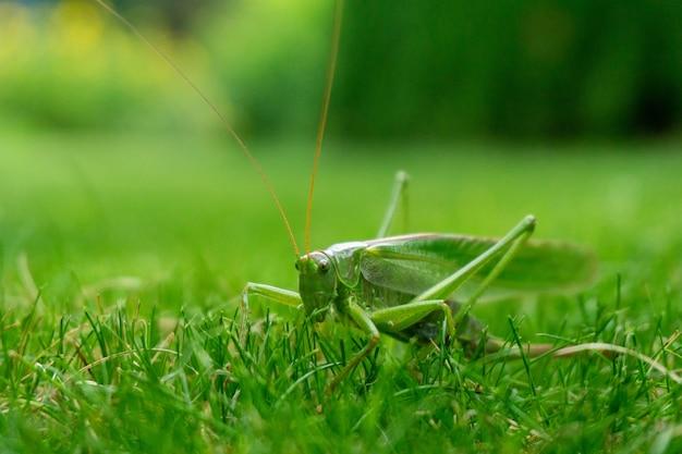 Closeup shot of a green grasshopper in the grass Free Photo