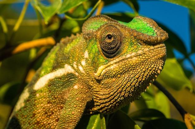 Colpo del primo piano di un'iguana verde Foto Gratuite
