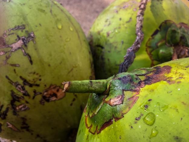 Closeup shot of green papaya fruits with water drops on them Free Photo