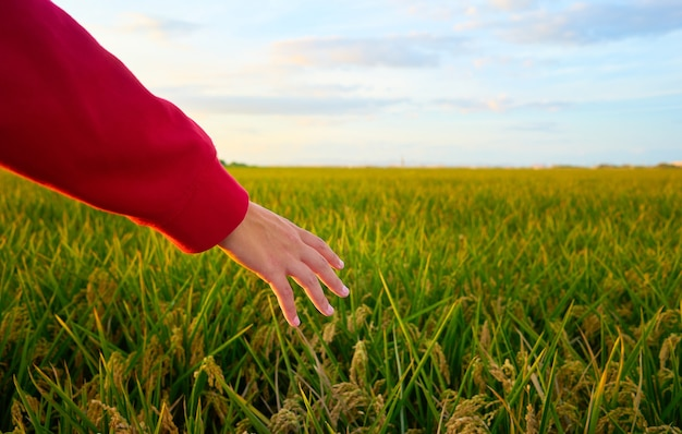 Closeup shot of a hand of a young lady covered by red jacket with green field Free Photo