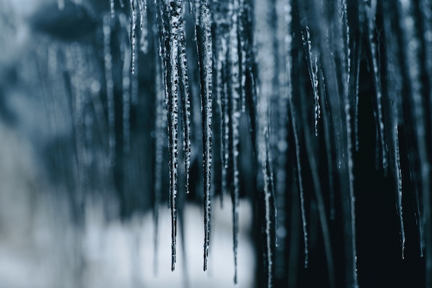 Closeup shot of hanging spiky frozen icicles Free Photo