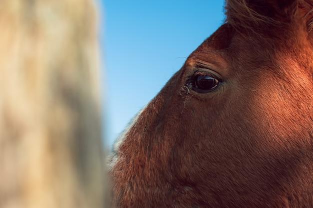 Colpo del primo piano della testa di un cavallo marrone Foto Gratuite