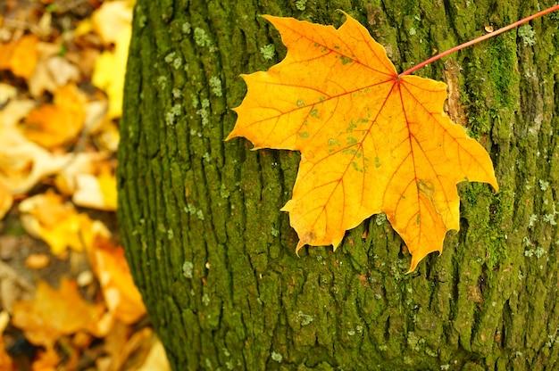 Colpo del primo piano di una foglia su una corteccia di albero durante l'autunno Foto Gratuite