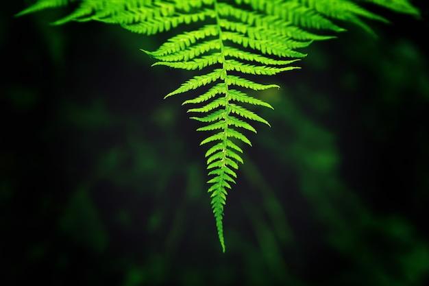 Colpo del primo piano delle foglie su un ramo che cresce in modo perfettamente allineato Foto Gratuite