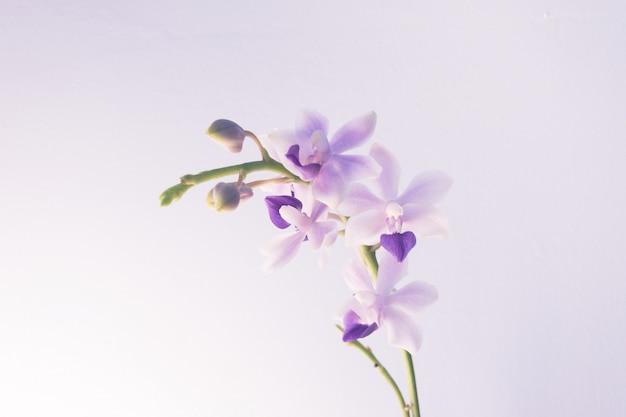 Colpo del primo piano di un fiore viola chiaro Foto Gratuite