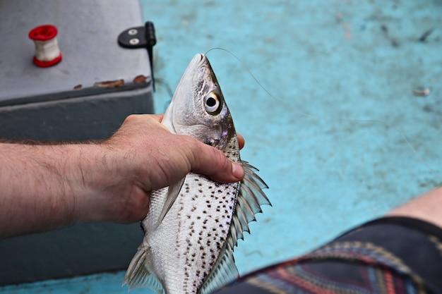 Colpo del primo piano di un maschio che uccide un pesce pescato Foto Gratuite