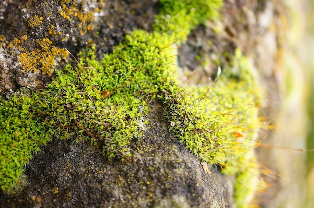 Closeup shot of the moss of the stone surface Free Photo