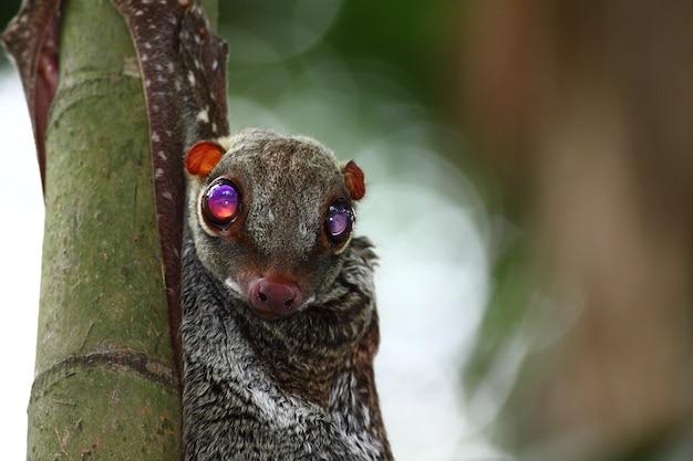 その目を大きく開いて竹にぶら下がっているバットのクローズアップショット 無料写真
