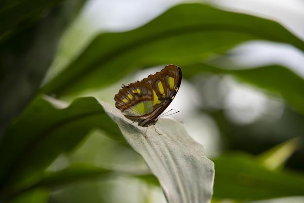 Макрофотография выстрел из красивой бабочки на зеленом растении с размытым фоном Бесплатные Фотографии