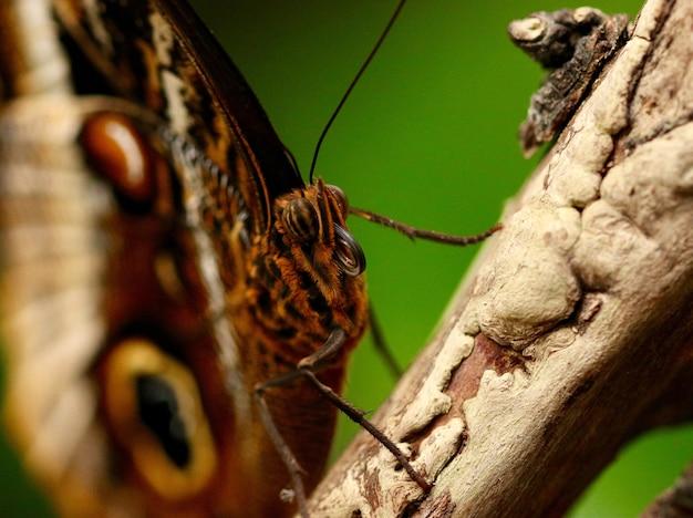 Снимок крупным планом красивой бабочки Бесплатные Фотографии