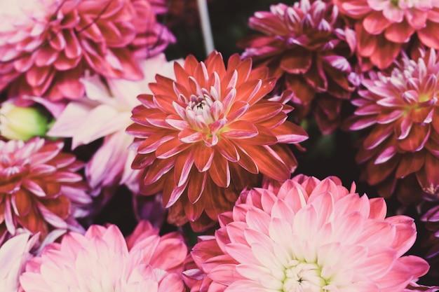 カラフルなダリアの花を持つ美しい花の組成のクローズアップショット 無料写真