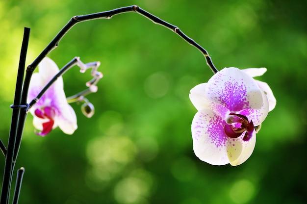 背景をぼかした写真の美しい蘭の花のクローズアップショット 無料写真