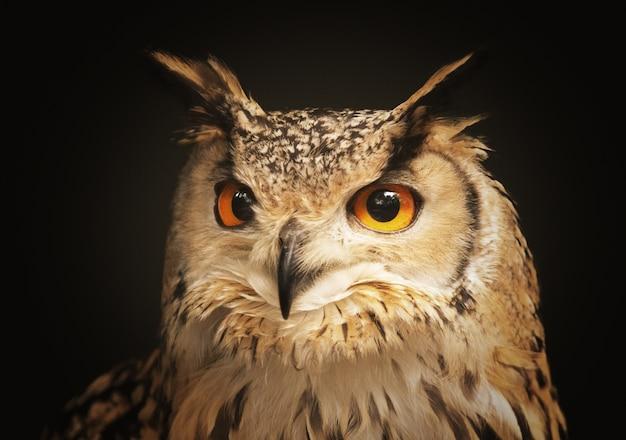 Крупным планом выстрел красивая сова глядя Бесплатные Фотографии