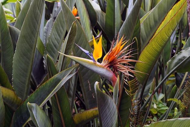 緑の葉と美しい楽園の花のクローズアップショット 無料写真