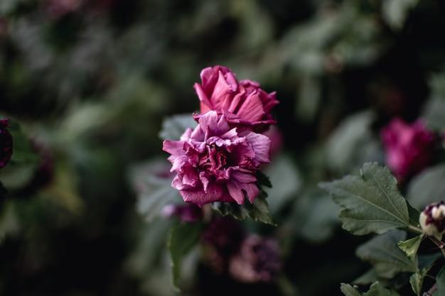 아름 다운 보라색 꽃의 근접 촬영 샷 무료 사진