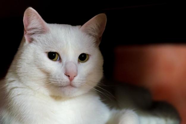 日陰に座っている緑の目を持つ美しい白猫のクローズアップショット 無料写真