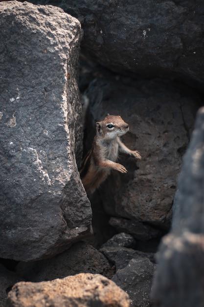 숲에서 바위 밖으로 머리를 고집 아름다운 야생 다람쥐의 근접 촬영 샷 무료 사진
