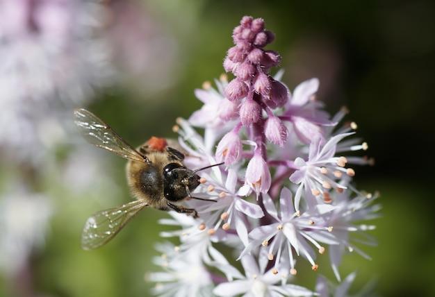 Снимок крупным планом пчелы, сидящей на красивом цветке Бесплатные Фотографии