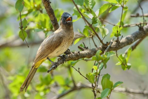 나뭇 가지에 앉아 새의 근접 촬영 샷-배경에 대한 완벽한 무료 사진