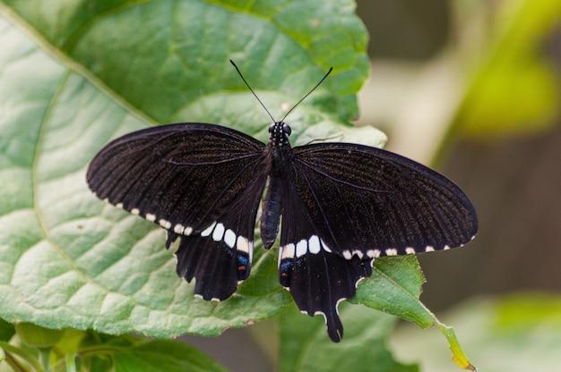 Съемка крупного плана черной бабочки на зеленом растении Бесплатные Фотографии