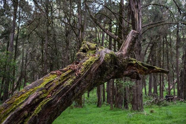 ケニア山で捕獲されたジャングルの真ん中に壊れたコケ覆われた木のクローズアップショット 無料写真