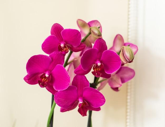 美しいピンクの蘭の束のクローズアップショット 無料写真