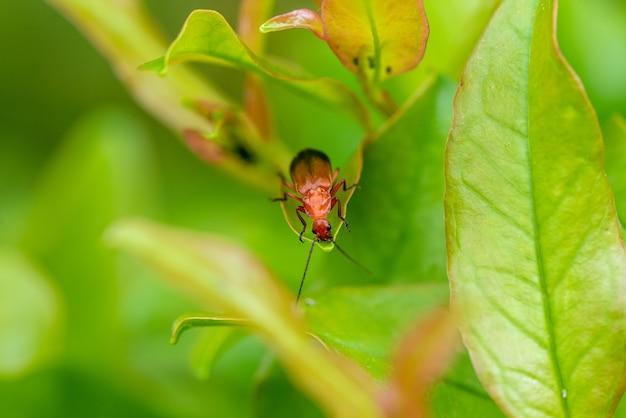배경 흐리게와 녹색 식물에 매미의 근접 촬영 샷 무료 사진