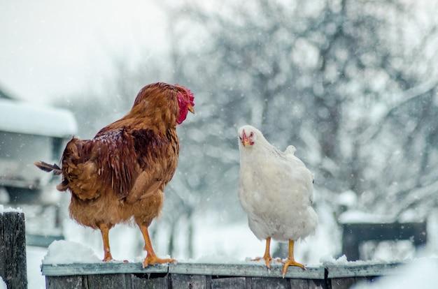 ぼやけた背景に雪の結晶と木の表面のコックと鶏のクローズアップショット 無料写真
