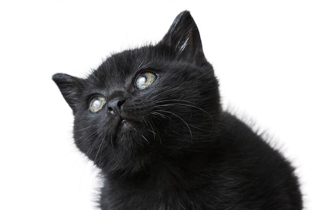 白で隔離されるかわいい黒い子猫のクローズアップショット 無料写真