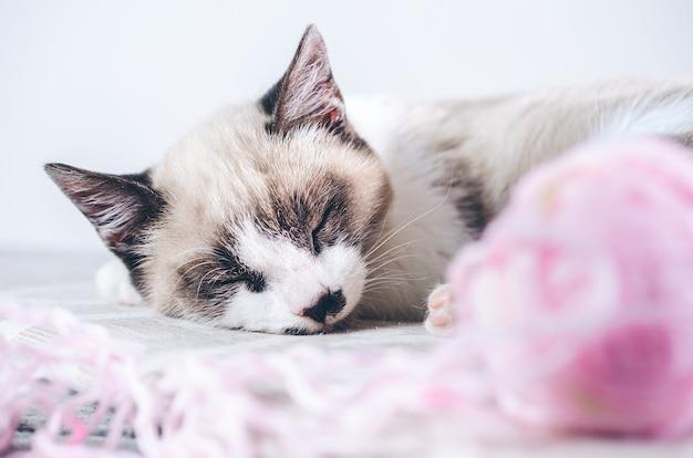 ウールのピンクのボールの近くで眠っているかわいい茶色と白猫のクローズアップショット 無料写真
