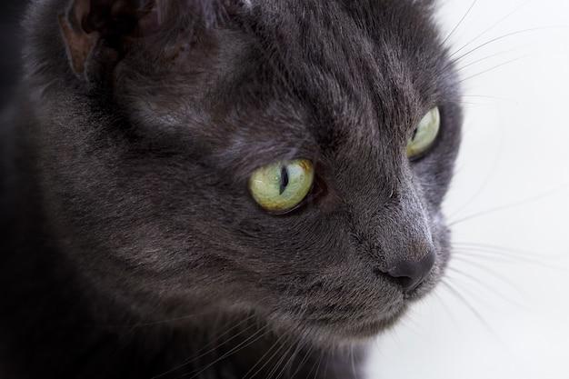 Макрофотография выстрел из лица милый серый кот с зелеными глазами Бесплатные Фотографии
