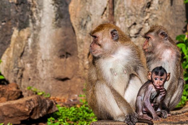 ジャングルの奇岩の近くのかわいい猿の家族のクローズアップショット 無料写真
