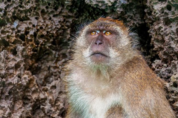 Съемка крупного плана милой обезьяны с текстурированными камнями Бесплатные Фотографии