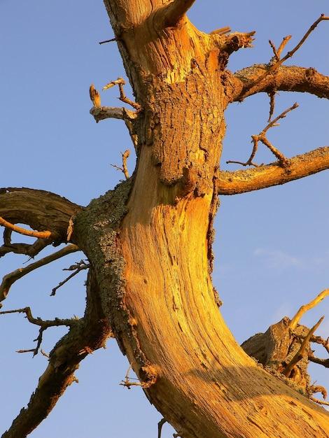 裸の枝を持つ破損した木の幹のクローズアップショット 無料写真