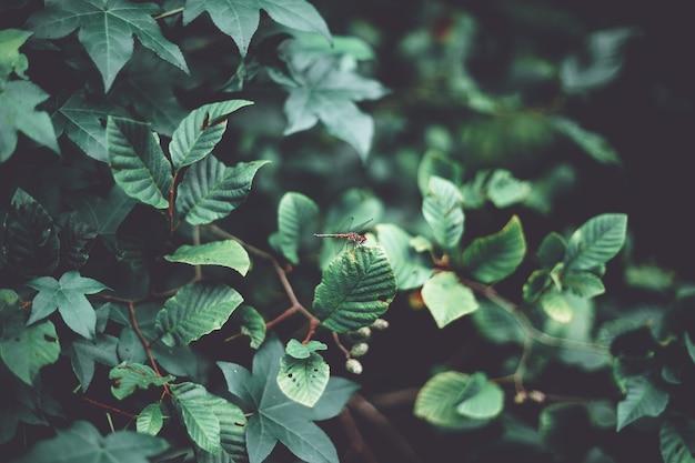 Макрофотография выстрел из стрекозы на красивых зеленых листьев в лесу Бесплатные Фотографии