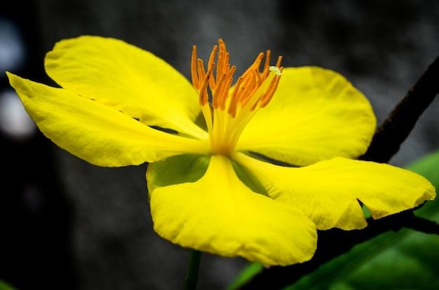昼間の黄色の花びらを持つ花のクローズアップショット 無料写真