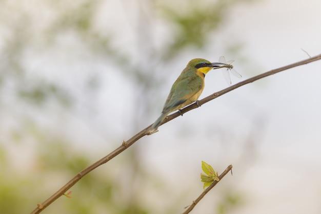 キャッチトンボと枝に立っているヒタキ鳥のクローズアップショット 無料写真