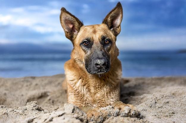 바다 경치에 독일 셰퍼드 강아지의 근접 촬영 샷 무료 사진