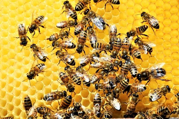 Снимок группы пчел, создающих пчелу, полную вкусного меда Бесплатные Фотографии