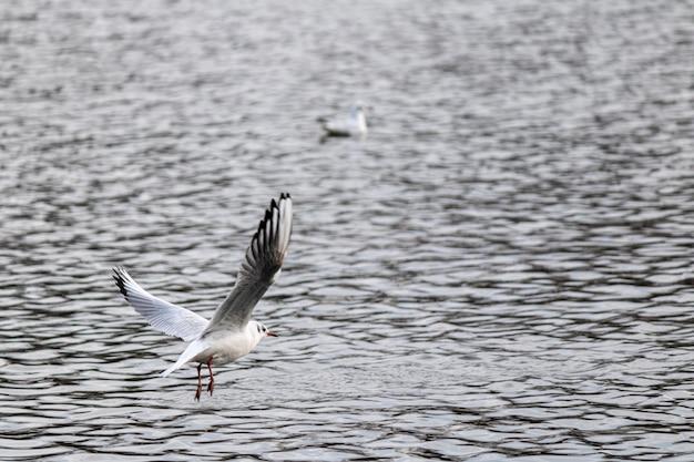 湖の上を飛んで泳ぐ準備をしているカモメのクローズアップショット 無料写真