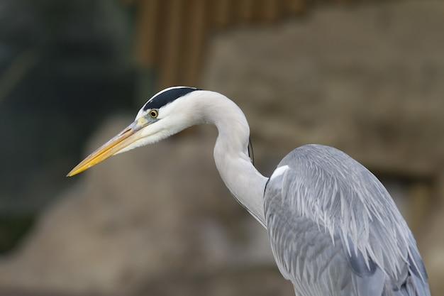 サギ鳥のクローズアップショット 無料写真