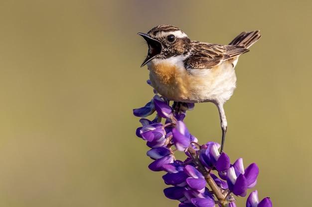보라색 꽃잎 꽃에 자리 잡고 집 참새 새의 근접 촬영 샷 무료 사진